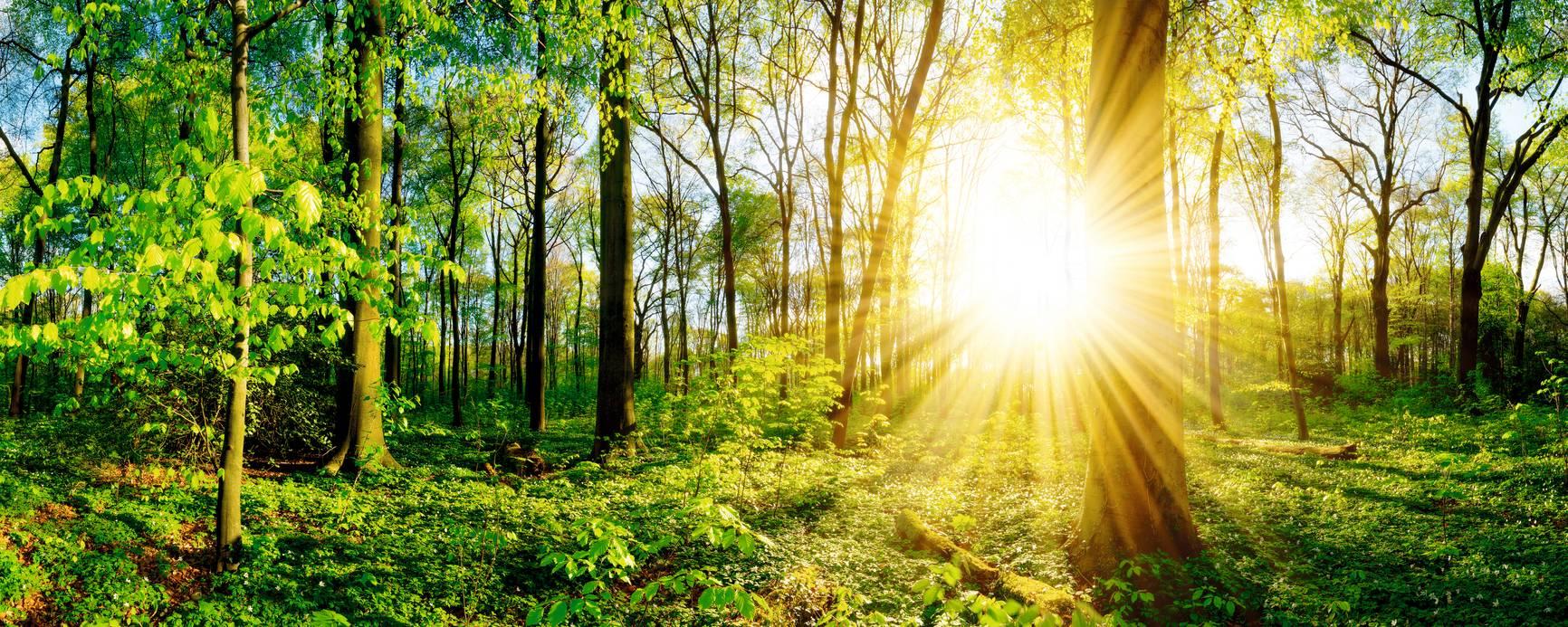 PRIMAGAS BioLPG - Wald, Bäume und Sonne, Sonnenstrahlen